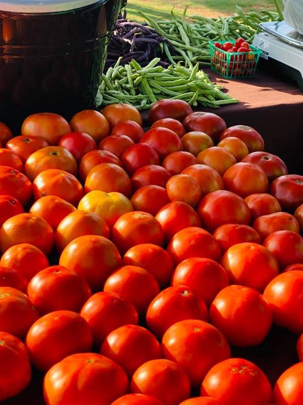 SFM Tomatos